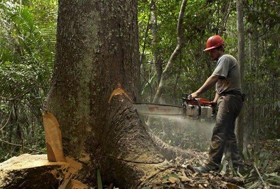 deforestacion_tala_arbol_tm