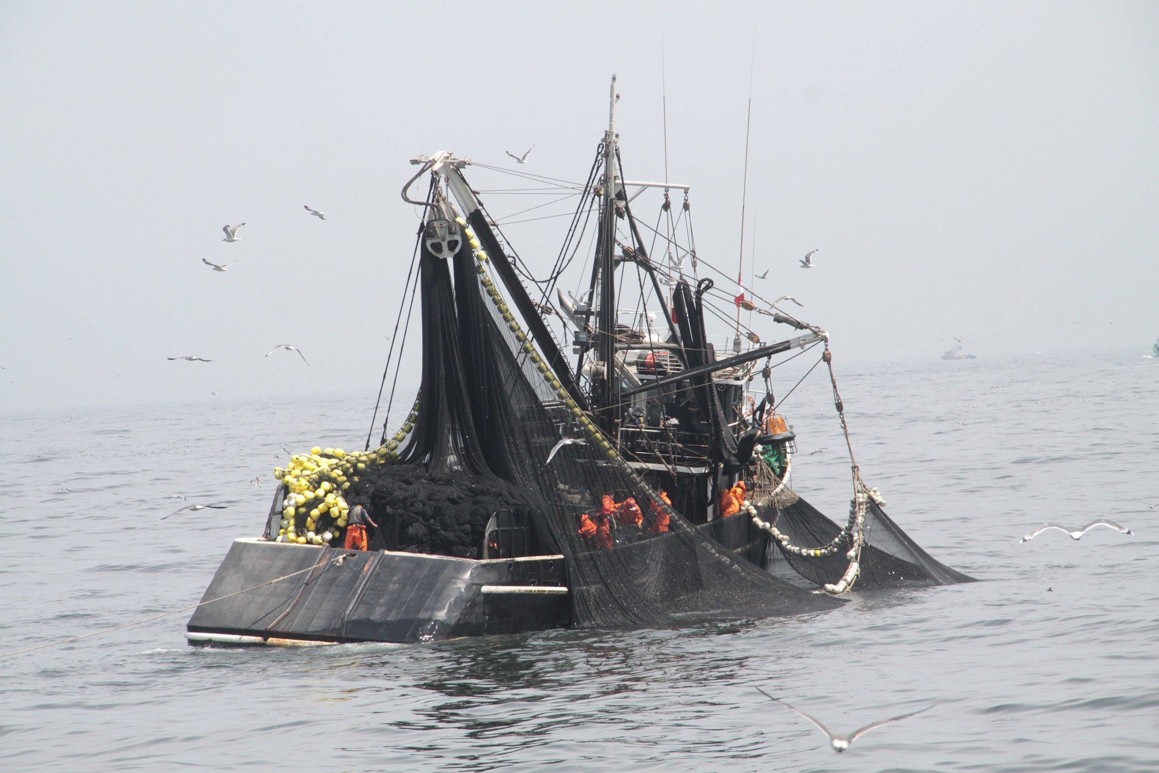 Sociedad nacional de pesquer a asegura que pesca de for Ministerio de pesqueria