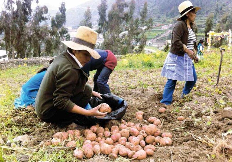 abisa_agricultura_spda