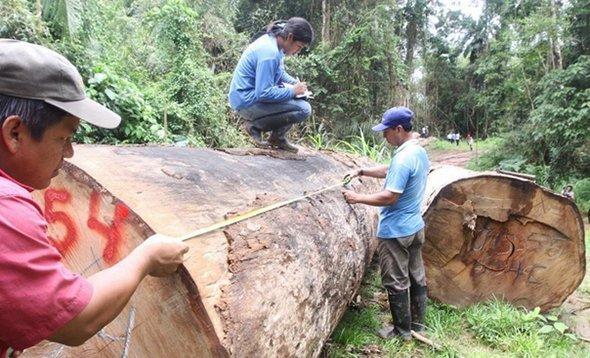 OSINFOR: concesiones forestales en Madre de Dios han evitado mayor avance de minería ilegal