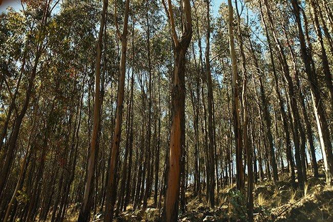 Régimen de Promoción de las Plantaciones Forestales en predios privados: ¿Avanzando en la promoción de plantaciones?