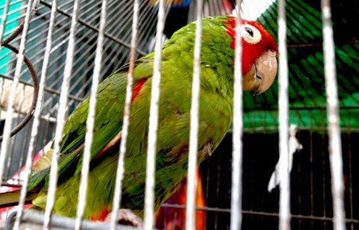 aves silvestres_serfor1