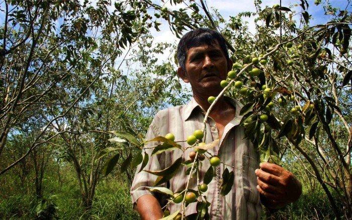 Agrobiodiversidad Loreto_SPDA