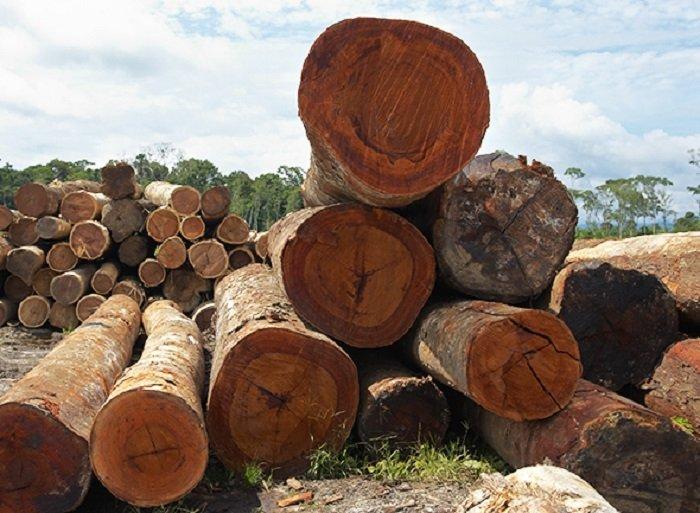 590_tala_spda_actualidad_ambiental