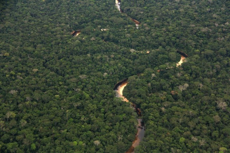 Bosque Amazonico Sur Occidental, Llanura amazónica 3