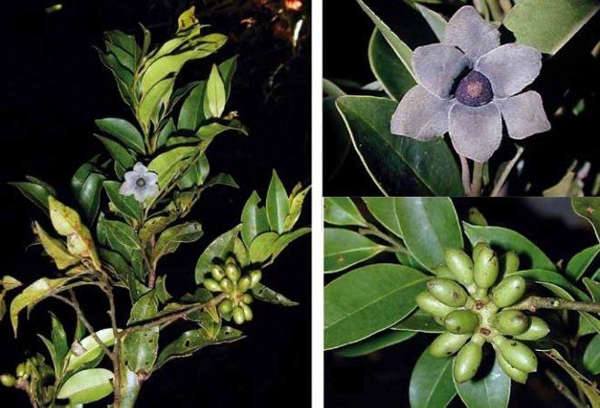nueva flora descubierta_sernanp