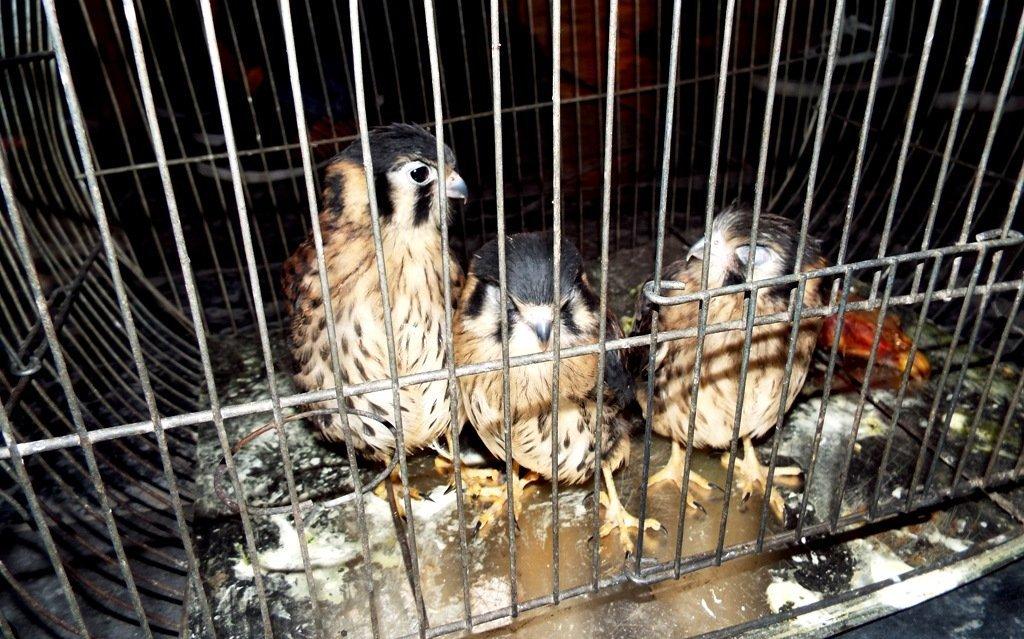 animales rescatados_serfor