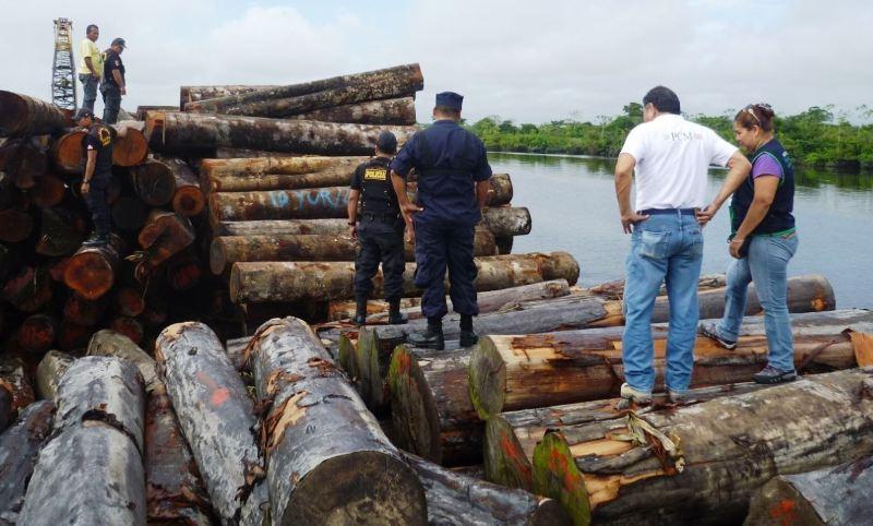 madera ilegal_andina