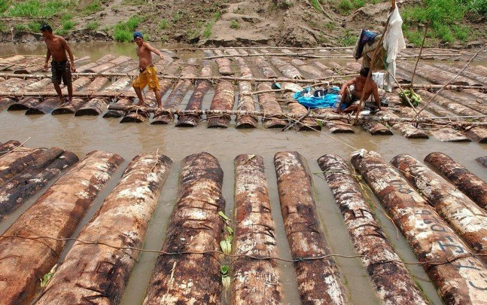tala_ilegal_peru_2_actualidad_ambiental_efe