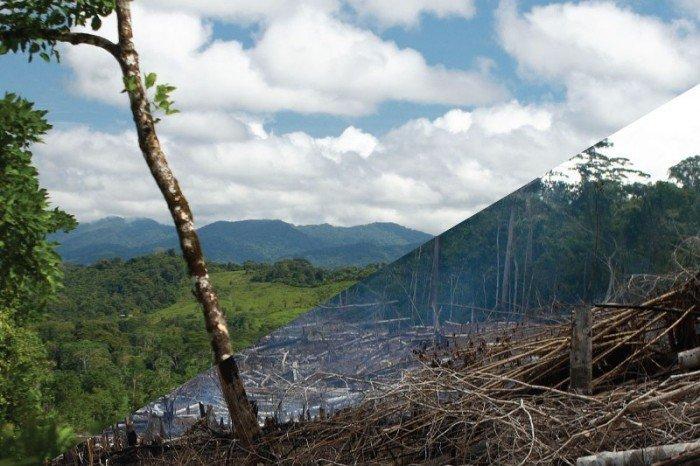 bosques - SPDA