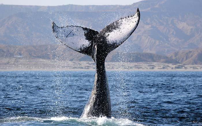 ballena Pacifico Adventures