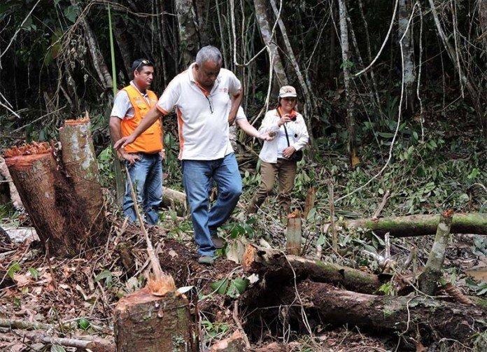 deforestación loreto - spda