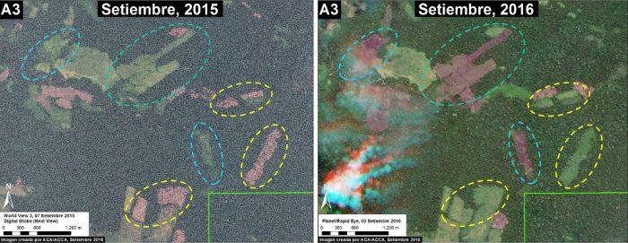 el-sira-deforestacion1-mapp
