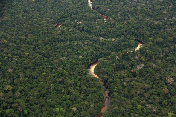 bosque-amazonico-sur-occidental-llanura-amazonica-3-700x467