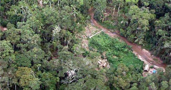 deforestacion_survival