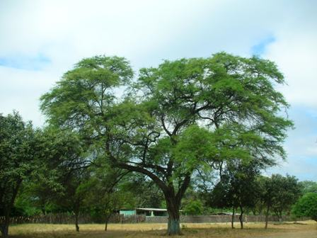 bosques_secos_nacho_tavara_minam