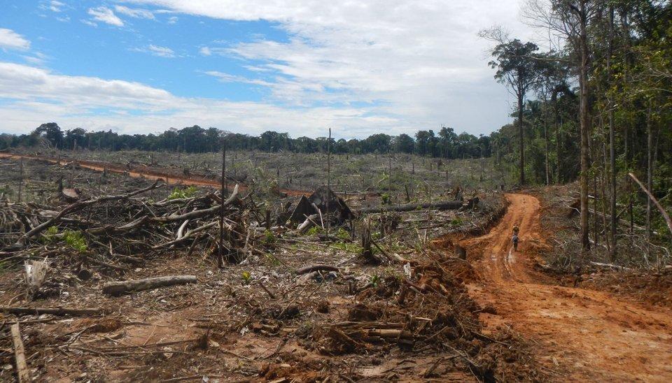 Palma_EnvironmentalInvestigationAgencyEIA