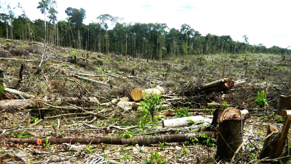 Tamshiyacu- deforestado