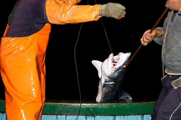 caza_De_tiburones_MundoAzul