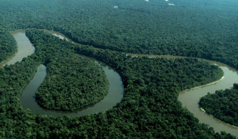 Bosques de tahuampa Rio Nanay_Foto RNAM