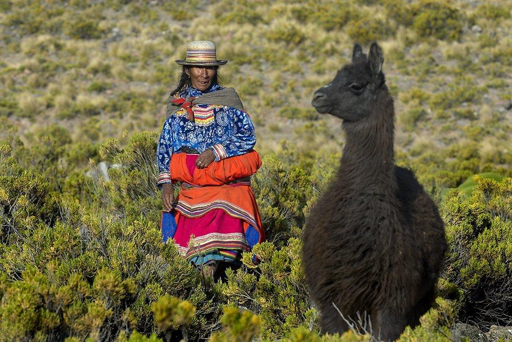 llama_spda_thomas_Muller3
