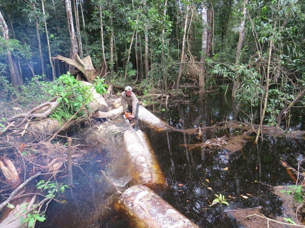 tala ilegal pacaya samiria_ sernanp