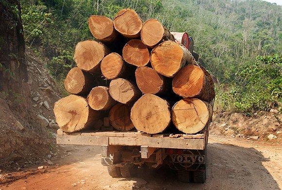 camion transportando madera