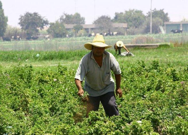 Agricultores valle del Tambo. Foto: Correo