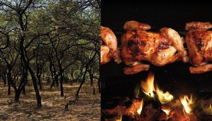 algarrobo y pollo a la brasa