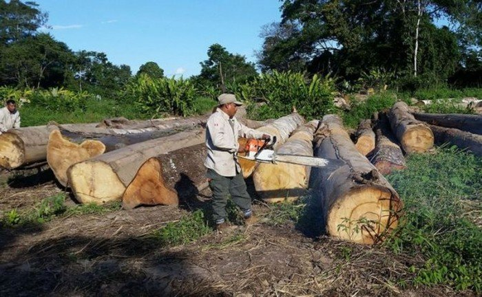 tala-ilegal_ diario La Región