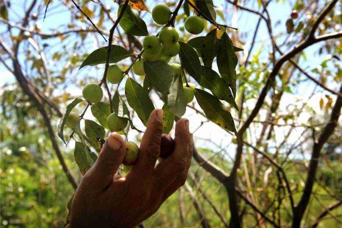 agrobiodiversidad_soberania_alimentaria_spda_iquitos
