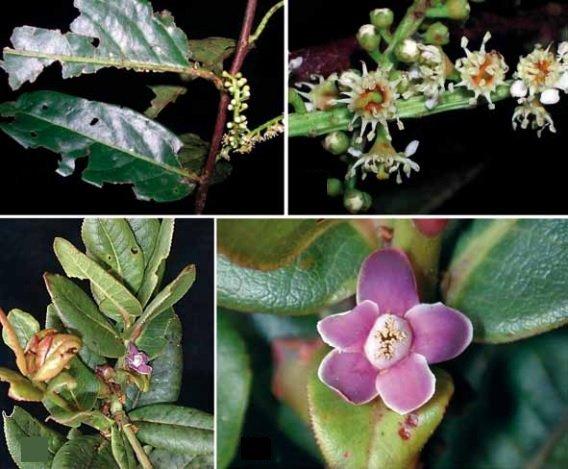 nueva flora descubierta_sernanp1