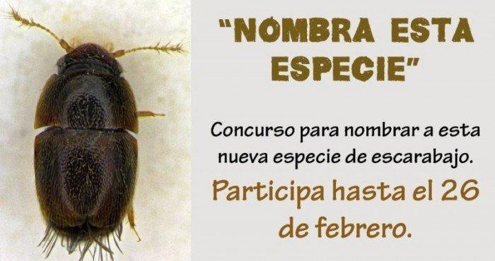 escarabajo_ACCA