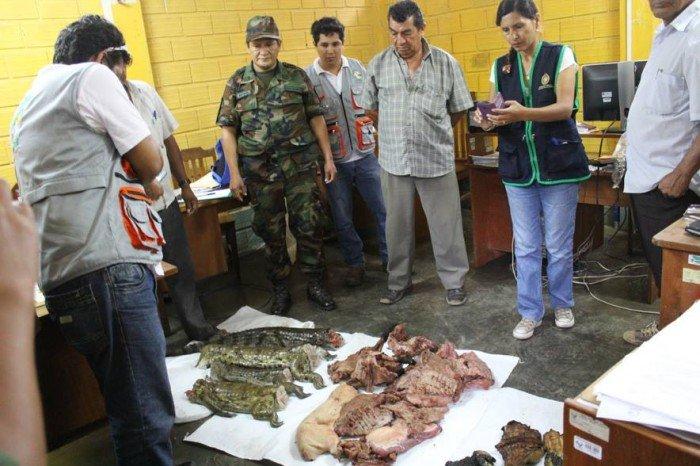 ucayali_pucallpa_trafico_fauna_actualidad_ambiental_1