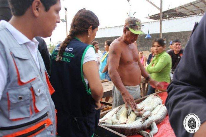 ucayali_pucallpa_trafico_fauna_actualidad_ambiental_2