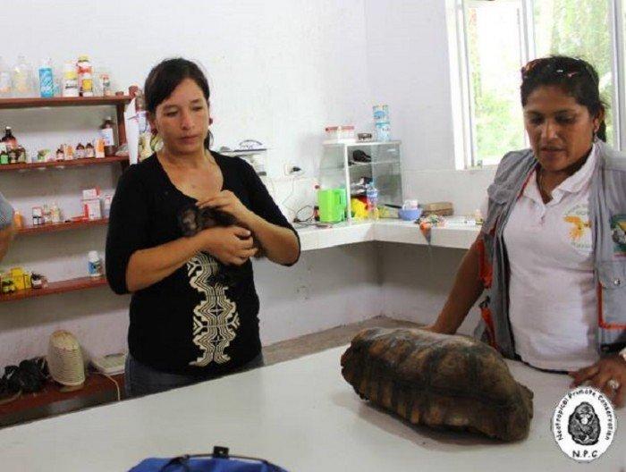 ucayali_pucallpa_trafico_fauna_actualidad_ambiental_9