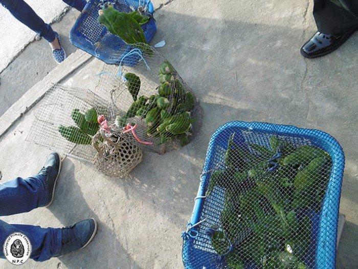 trafico_fauna_silvestre_vado_yurimaguas_loreto_actualidad_ambiental_3