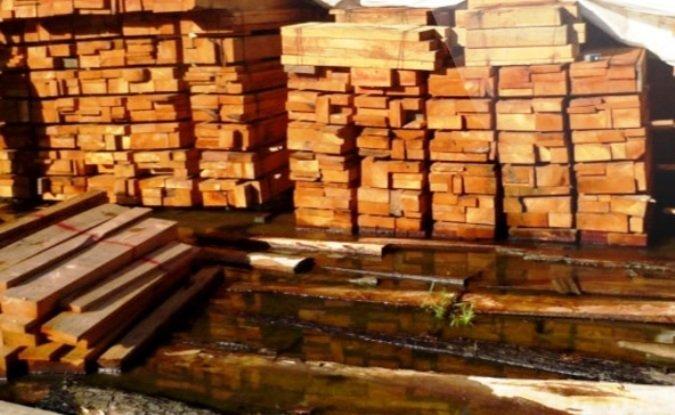 madera ilegal - crónica viva