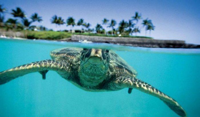 00093-sea-turtle-web