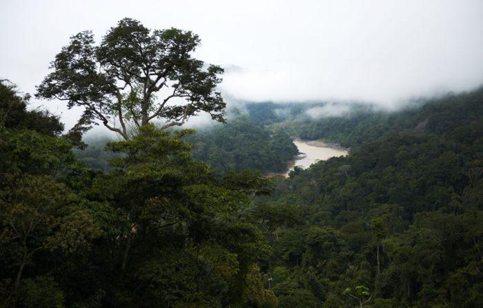 bosque_actualidad_ambiental_serfor
