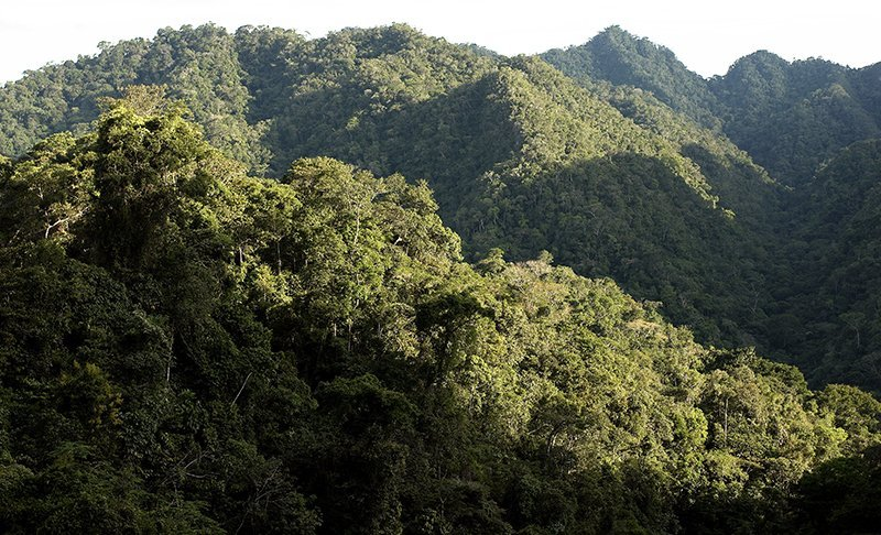 800_bosques_actualidad_ambiental_osinfor