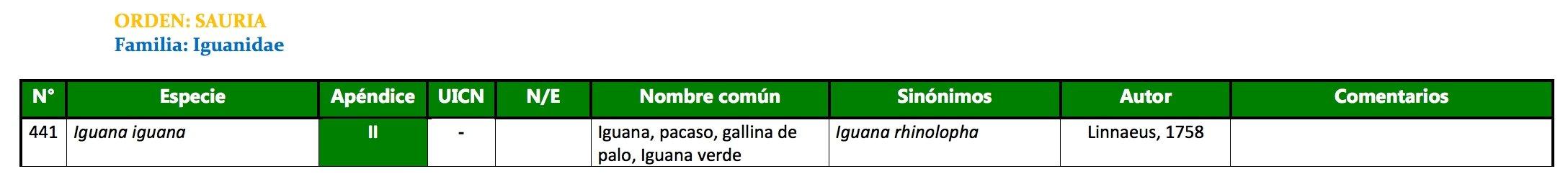 1_iguana